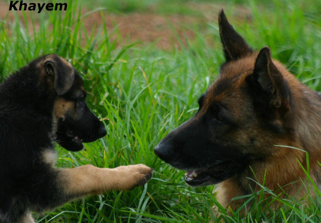 Vesper and Neeri 9 weeks