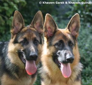 Jed and Vesper 5 months