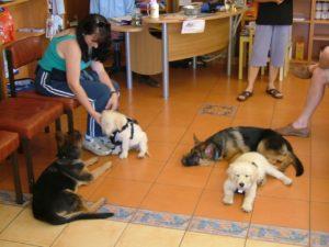 Zed and Monty Puppy Preschool