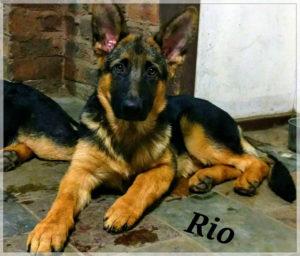 Rio Christmas 2017
